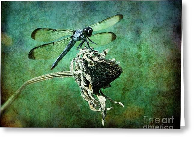 Dragonflies Greeting Cards - Dragonfly Art Greeting Card by Sari Sauls