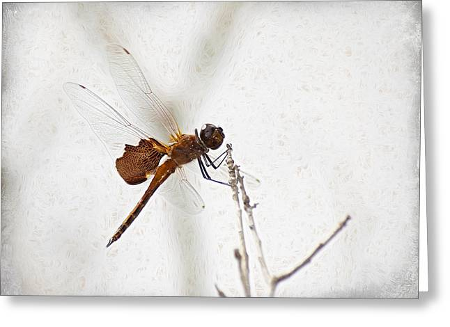 Dragonfly Greeting Card by Carolyn Marshall