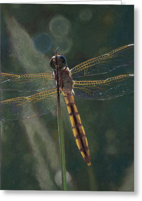 Dragonflies Pastels Greeting Cards - Dragonfly Greeting Card by Christopher Reid