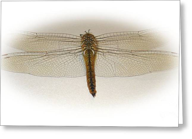 Dragonfly Collection. Image 6.1 Greeting Card by Oksana Semenchenko