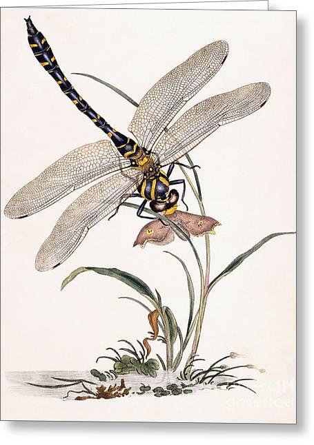Dragonfly Greeting Card by Edward Donovan
