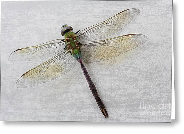 Interior Still Life Digital Greeting Cards - Dragonfly Greeting Card by Ella Kaye Dickey
