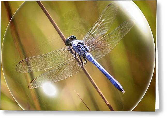 Square Format Greeting Cards - Dragonfly in a Bubble Greeting Card by Carol Groenen
