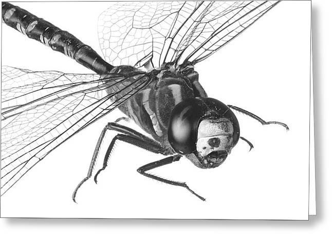 Wetland Greeting Cards - Dragonfly Greeting Card by Jim Hughes