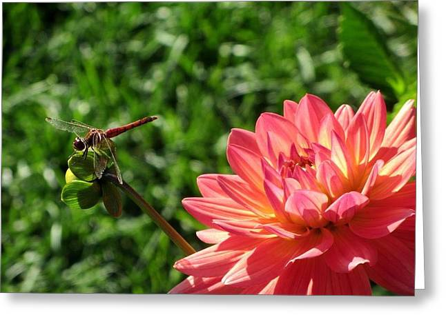 Spring In Maine Photographs Greeting Cards - Dragonfly Landing Greeting Card by Yourstrulyjuli  Photography and Art