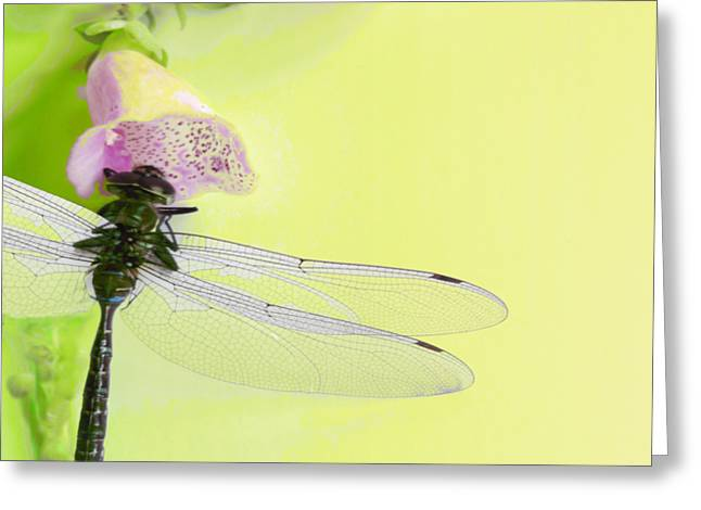 Occasion Greeting Cards - Dragonfly Greeting Card by Mike Breau