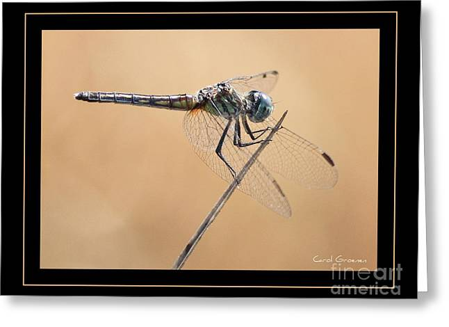 Dragonfly Macro Greeting Cards - Dragonfly Needlepoint with Border Greeting Card by Carol Groenen