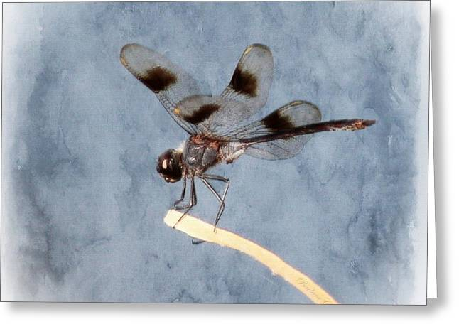 Hovering Greeting Cards - Dragonfly On Edge  Greeting Card by Barbara Chichester