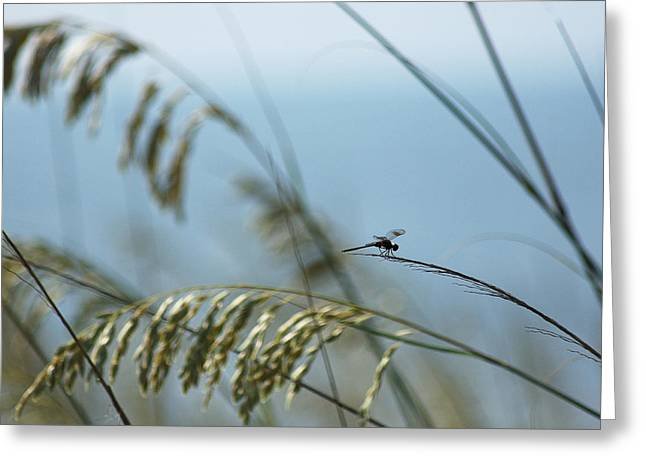Dragonfly On Sea Oats Greeting Card by Robert  Suits Jr
