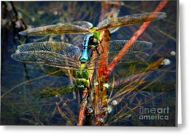 Larva Greeting Cards - Dragonfly Reflections while Planting Young Greeting Card by Reid Callaway