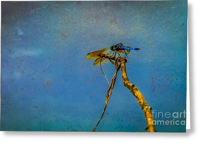Green Day Greeting Cards - Dragonfly resting Greeting Card by Claudia Mottram