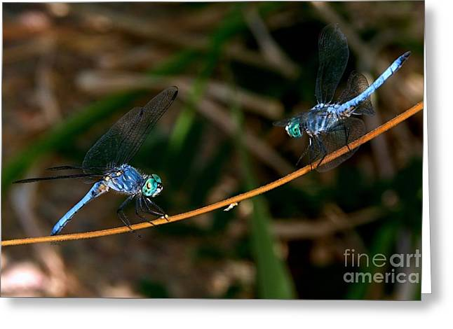 Purchase Greeting Cards - Dragonfly Stand-Off Greeting Card by Patrick Witz
