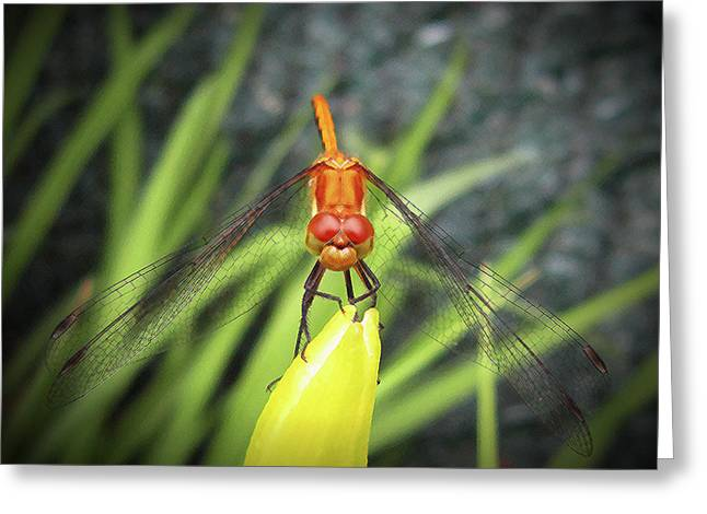 Dragonfly Stare Greeting Card by Mary Bedy