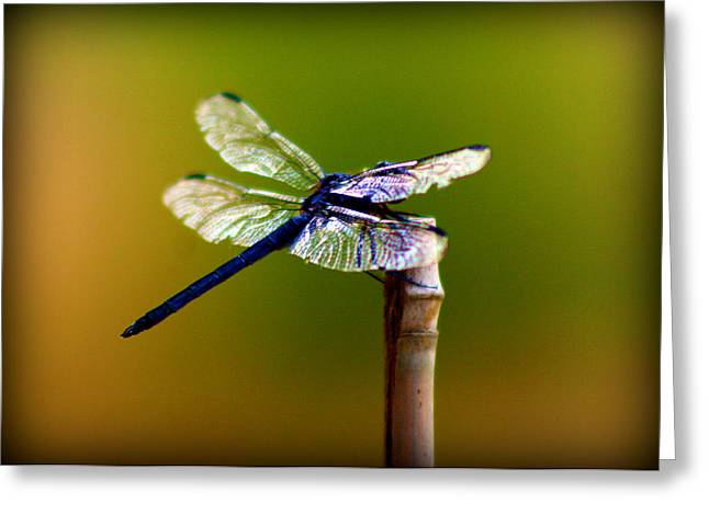 Dragonfly Greeting Card by Susie Weaver