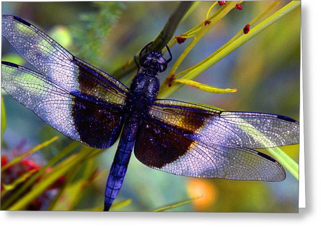 Dragonflies Photographs Greeting Cards - Dragonfly Greeting Card by Tony Ramos