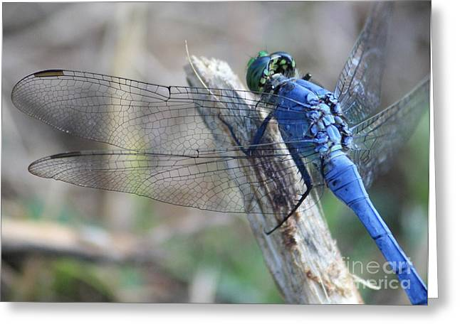 Dragonfly Wing Detail Greeting Card by Carol Groenen