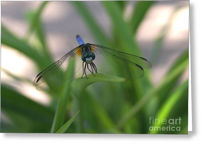 Dragonfly Wit An Attitude Greeting Card by Debbie May
