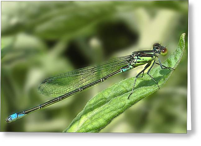 Dragon Fly Greeting Cards - DragonFly1 Greeting Card by Svetlana Sewell