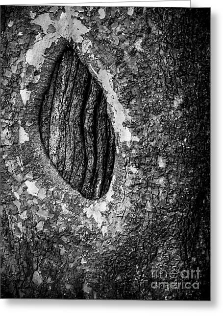Abstractions Greeting Cards - Dragons Eye in Black and White Greeting Card by James Aiken