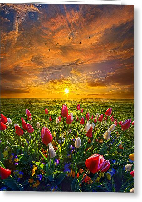 Tulip Tree Greeting Cards - Drawing Near to Me Greeting Card by Phil Koch