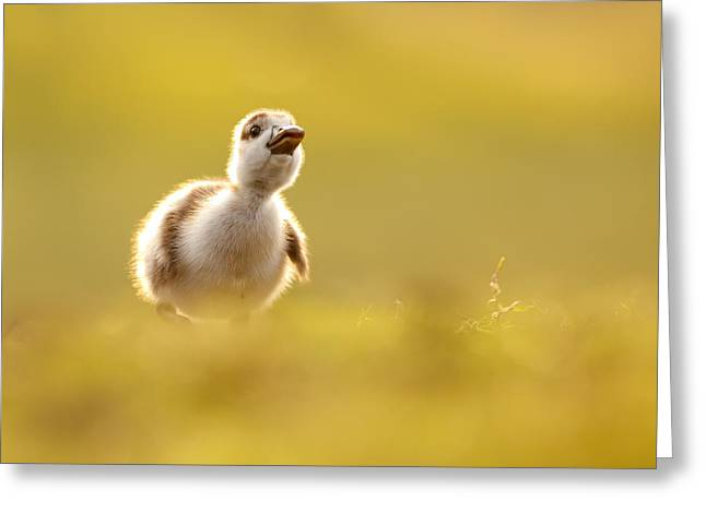 Suckling Greeting Cards - Dream Duckie _Egyptian Gosling Greeting Card by Roeselien Raimond