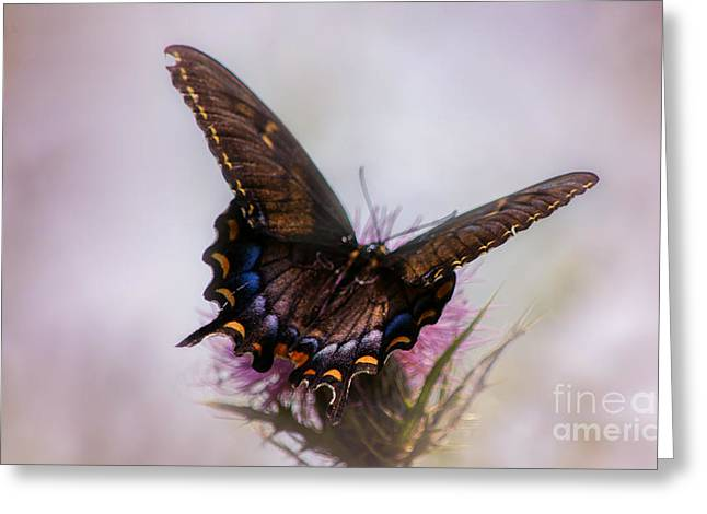 Dream Of A Butterfly Greeting Card by Rima Biswas