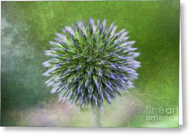 Dream Thistle Greeting Card by Venetta Archer