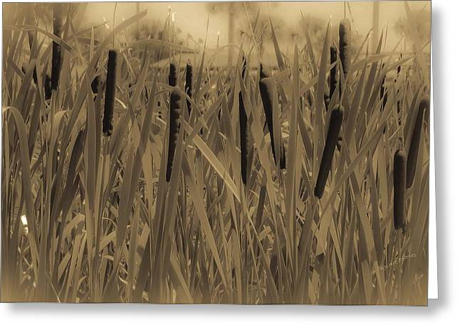 Sepia And Cream Greeting Cards - Dreaming of Cattails Greeting Card by DigiArt Diaries by Vicky B Fuller