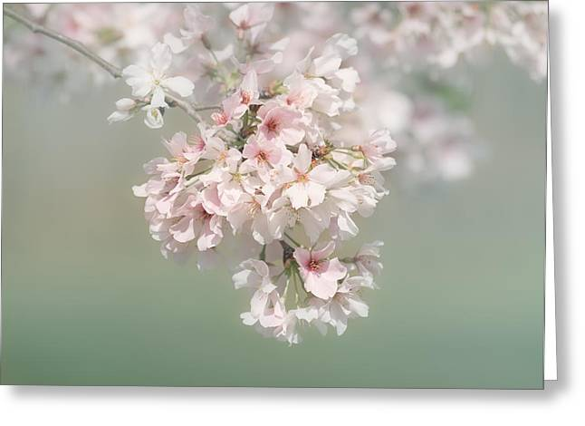 Kim Photographs Greeting Cards - Dreaming of Spring Greeting Card by Kim Hojnacki