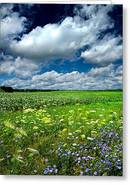 Dreaming Of Summer Greeting Card by Phil Koch