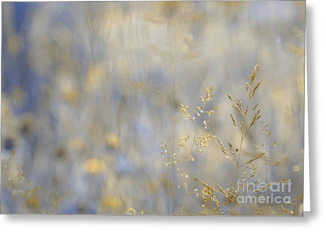 Golds Greeting Cards - Dreamland - 01-v2 Gold Greeting Card by Variance Collections