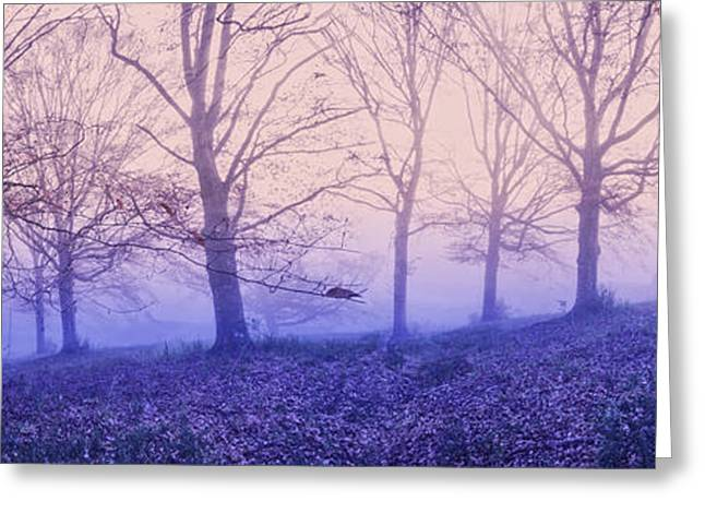 Fall Colors Greeting Cards - Dreams in the Mist Greeting Card by Debra and Dave Vanderlaan