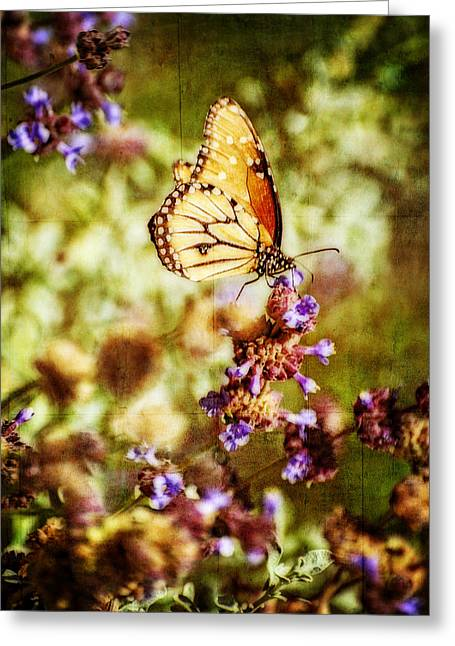 Queen Butterfly Greeting Cards - Dreams of Spring  Greeting Card by Saija  Lehtonen