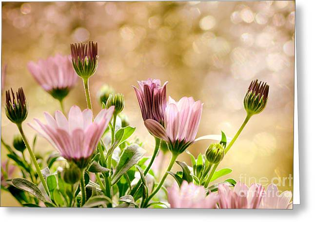 Fragrant Greeting Cards - Dreams Greeting Card by SK Pfphotography