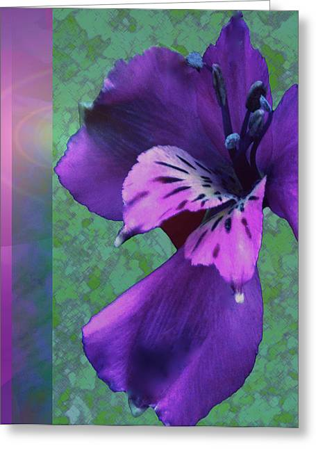 Stimulating Colored Flower Greeting Cards - Dreamtime Blossom Greeting Card by Debra     Vatalaro