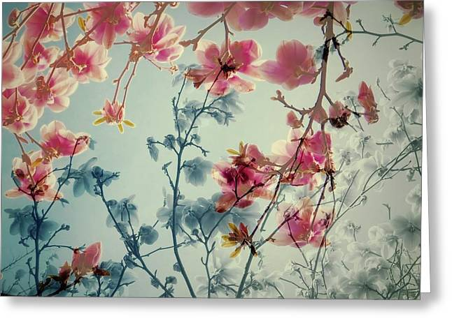 Powder Greeting Cards - Dreamy Blossoms Greeting Card by Patricia Strand