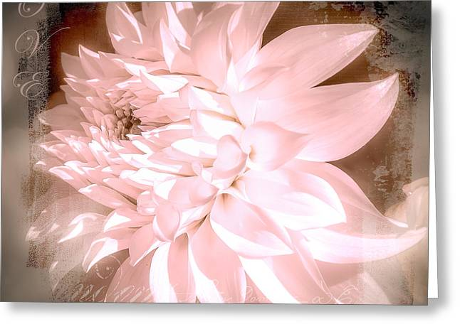Aster Greeting Cards - Dreamy Dahlia  Greeting Card by Julie Palencia