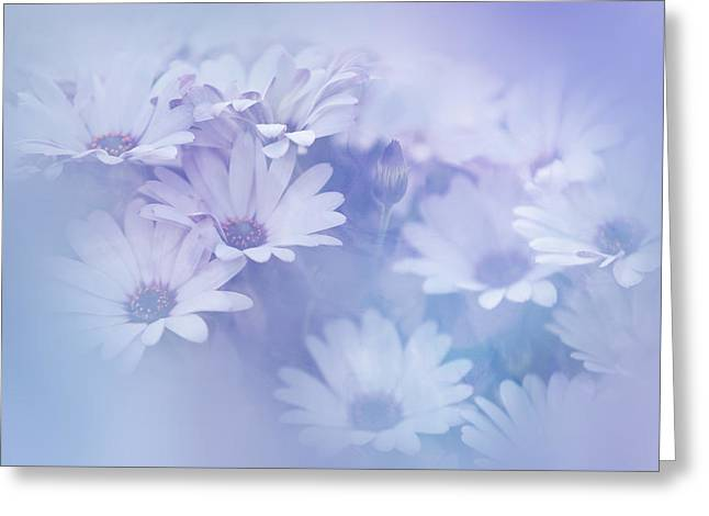 Rainbow Fantasy Art Greeting Cards - Dreamy Daisies Greeting Card by Jenny Rainbow