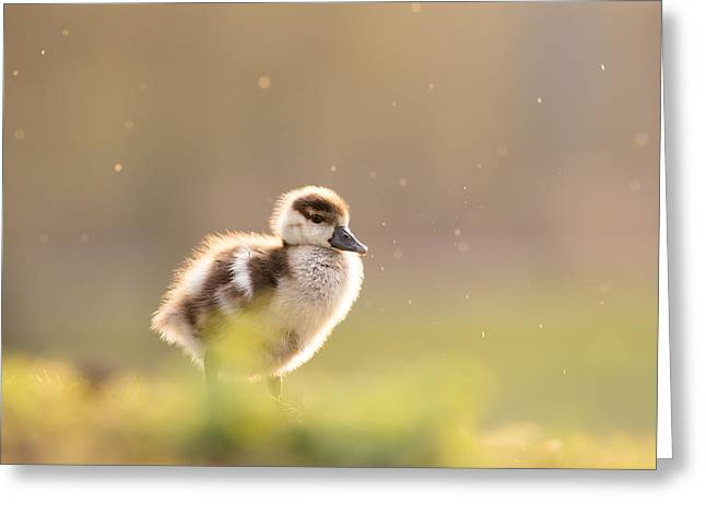 Cute Bird Greeting Cards - Dreamy Duckling Greeting Card by Roeselien Raimond