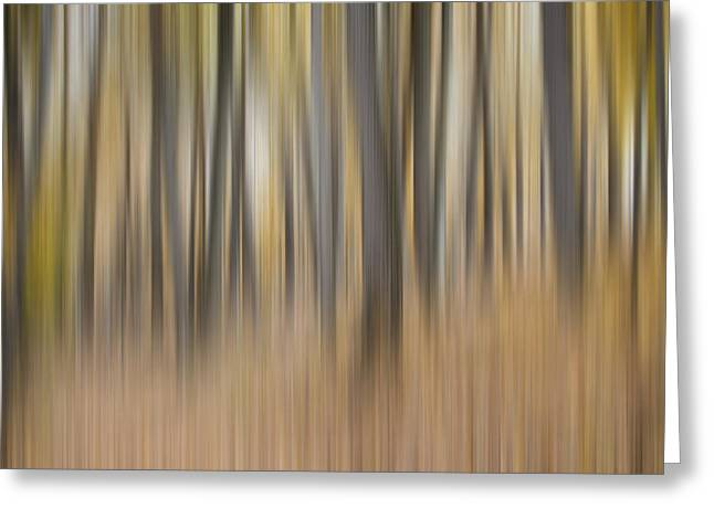 Dreamy Forest Greeting Card by Tom Mc Nemar