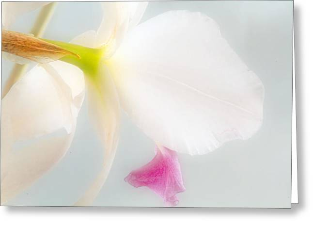 Dreamy Greeting Card by Geraldine Scull