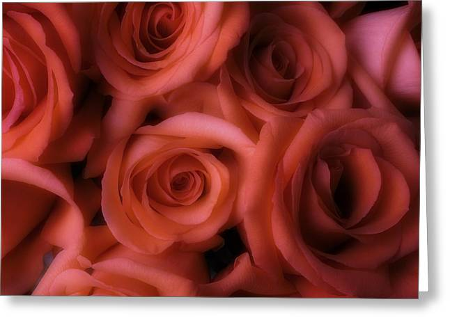 Dreamy Greeting Cards - Dreamy Roses Greeting Card by Garry Gay