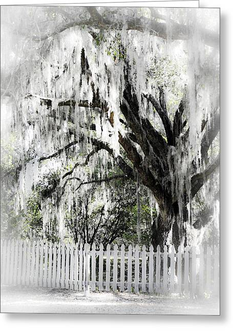 Rural Setting Greeting Cards - Dreamy Southern Oak Tree Greeting Card by Carolyn Marshall