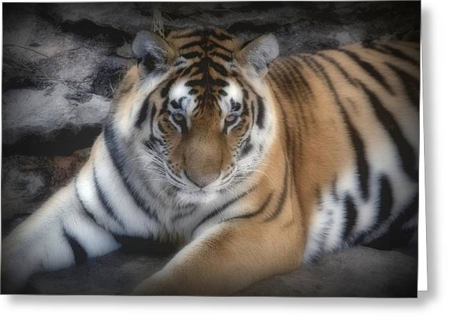 Dreamy Tiger Greeting Card by Sandy Keeton