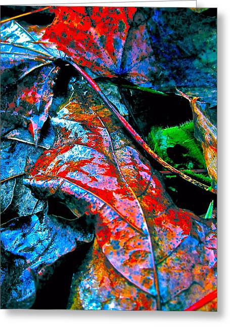 Compost Greeting Cards - Drenched in Color Greeting Card by Gwyn Newcombe