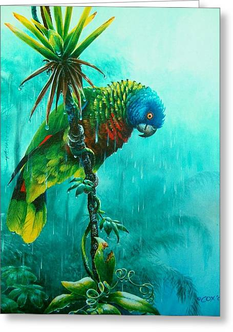 St. Lucia Parrot Greeting Cards - Drenched - St. Lucia Parrot Greeting Card by Christopher Cox