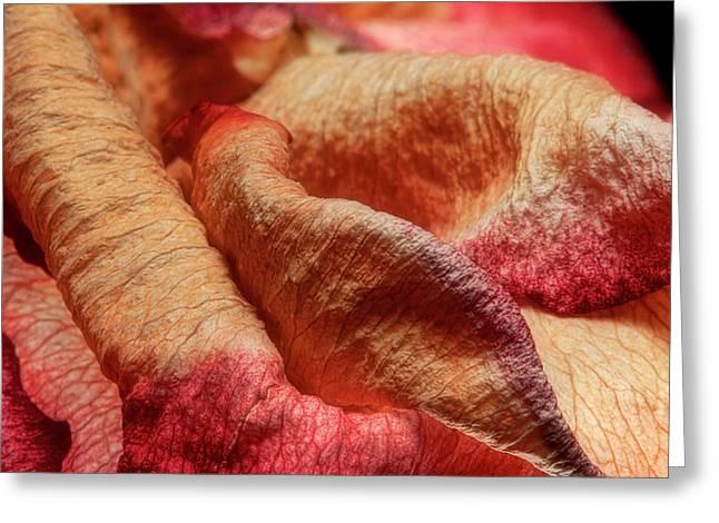 Rose Petals Greeting Cards - Dried Rose Petals II Greeting Card by Tom Mc Nemar