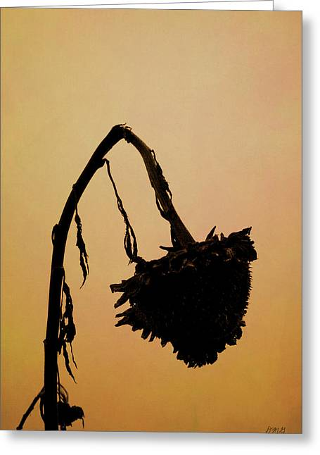 Dried Sunflower Greeting Card by Dave Gordon