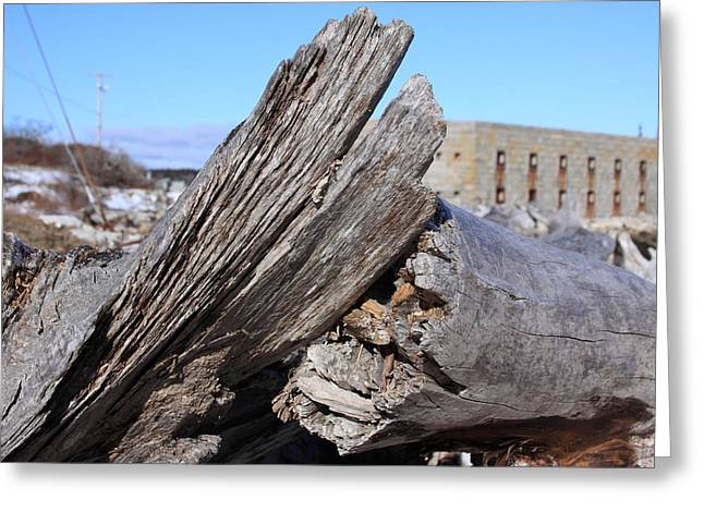 Maine Beach Mixed Media Greeting Cards - Drift wood at Fort popham Greeting Card by Lewis Journeyman