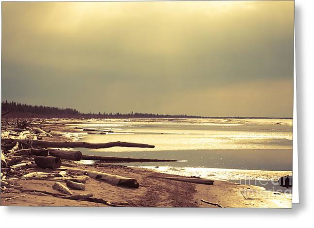 Glistening Water Greeting Cards - Drifted to the Beach Greeting Card by Lisa Killins
